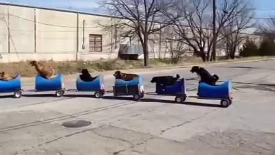 Паровозик для собак