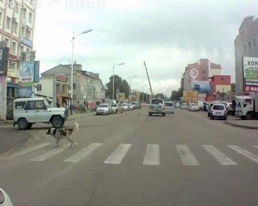 Как надо переходить дорогу.