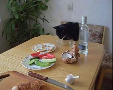 Кошик - алкошик / Cat - an alcoholic