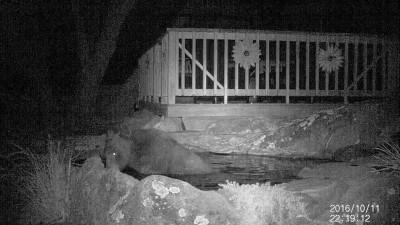 Медведь ловит карпов