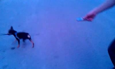 Собакен VS Мобильник