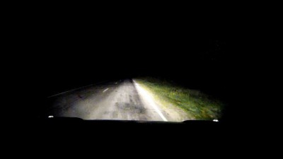 Кабаны на дороге