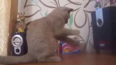 Кот. саб