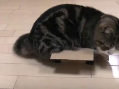 Кот - любитель коробочек