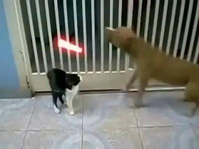 кот джедай