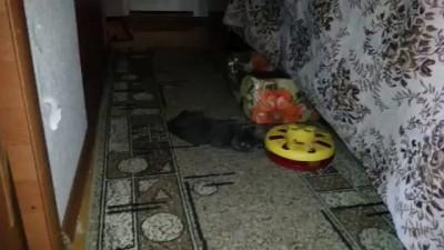 Кот играет / cat playing