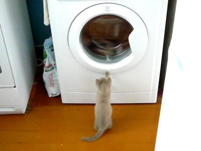 Кошак и стиралка