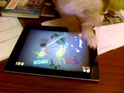 Cat Plays Fruit Ninja on iPad