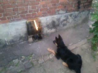 Собакен vs Зеркало