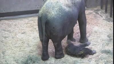 Слонёнок с мамой