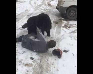 Собака против алкаша