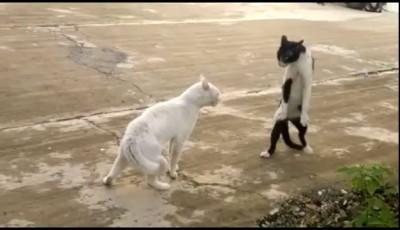 Охеревший Кот