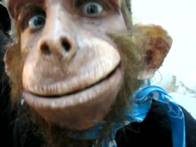 Человек - обезьяна