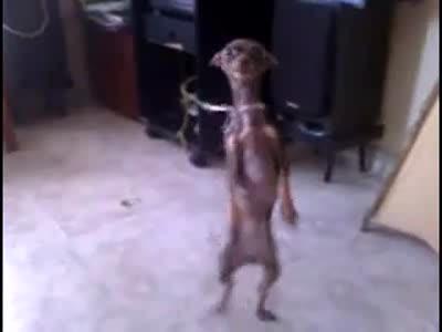 танцы собачьи