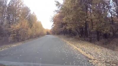 Кенгуру гуляет в лесу под Саратовом