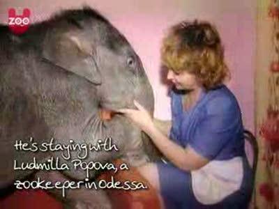 Домашний слоненок из Одессы