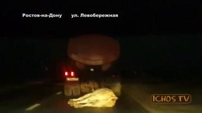 ШОК! Издевательство над коровой. Ростов-на-Дону