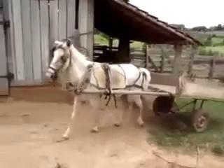 Как парковаться нужно ))