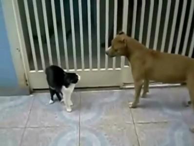 Кот Вейдера