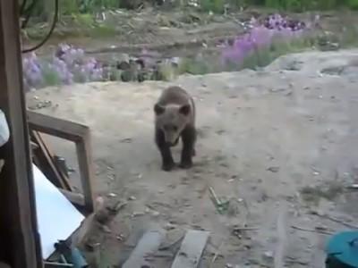 Не дразни медведя