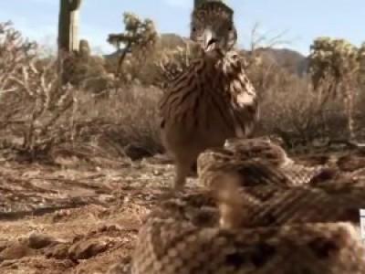 Птица против змеи