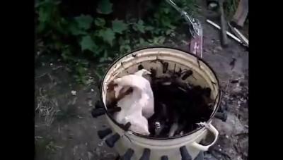 Куриное Ф-ф-фристайло