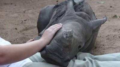 Baby Rhino Gertjie Chilling