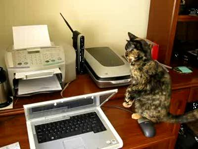 Кот против сканера