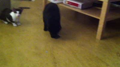 Кот помогает по хозяйству