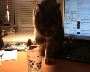 Кот пьёт воду лапой из стакана