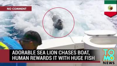 Подбросьте до пляжа: Тюлень в катере