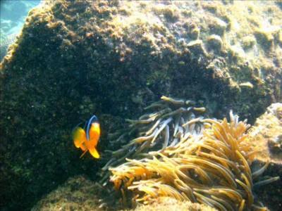 Фауна океана близ Фуджейра