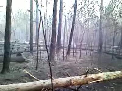 Лыткаринский лес