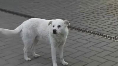 Очень дружелюбная собака на заправке
