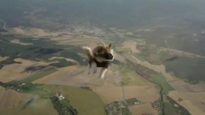 Коты на парашютах