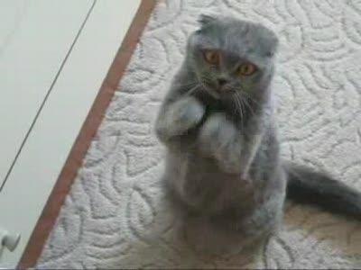Сидячий танец кота