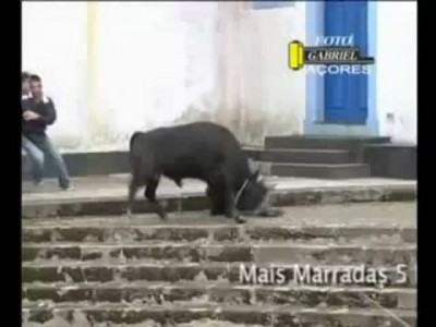 Экстремальное развлечение с быками