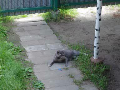 Кошка после секаса