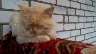 Кот от всех устал