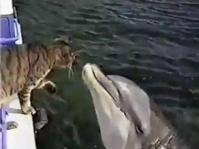 котик и дельфин