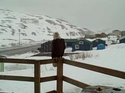Чудеса природы на Аляске