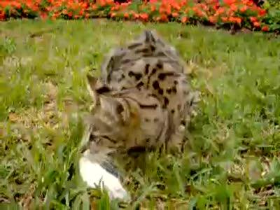 кот и его добыча