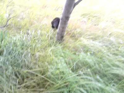 охотница2