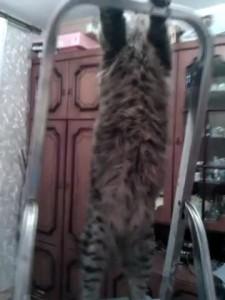 Кот - электрик