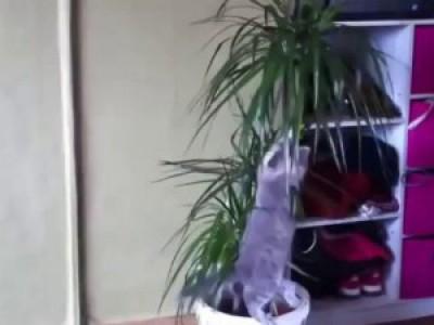 Вот так прыгают коты