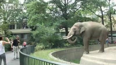 Меткий слон