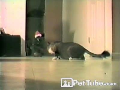сюрприз для кота