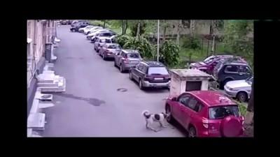 """Приколы 2015 """"""""ВКУСНАЯ МАШИНА"""""""" прикол с собакой и машиной. Приколы Видео 2015"""