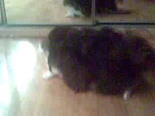 собака и кошка2