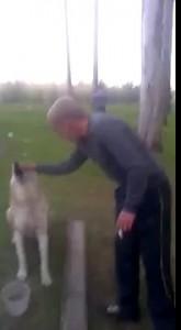 Собака здоровается